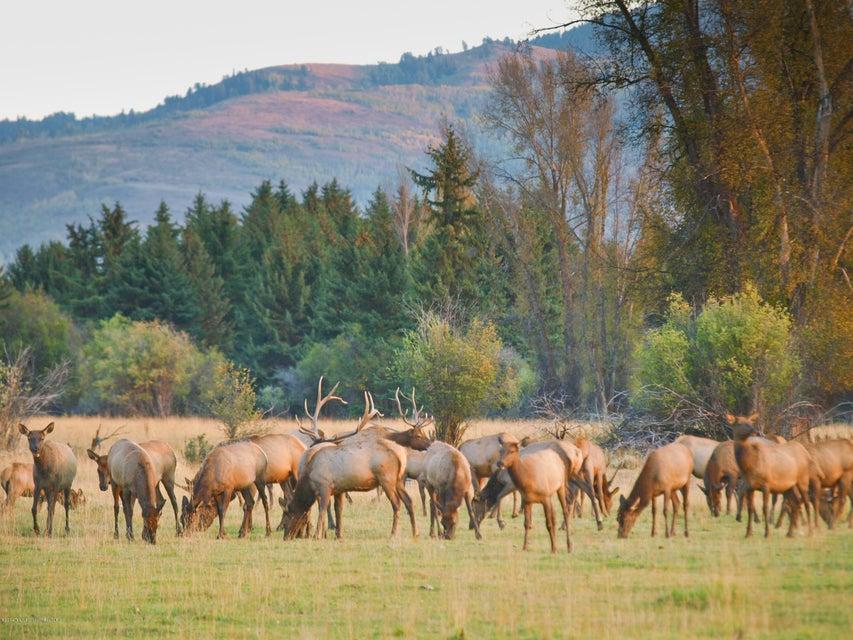 Elk Herd on Property