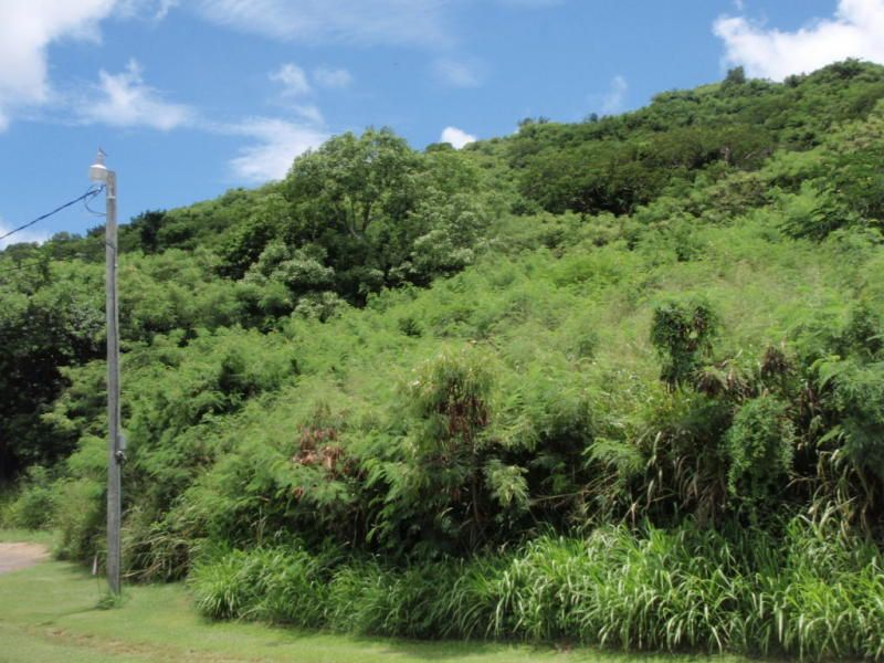 Additional photo for property listing at 48 Beeston Hill CO St Croix, Virgin Islands United States Virgin Islands