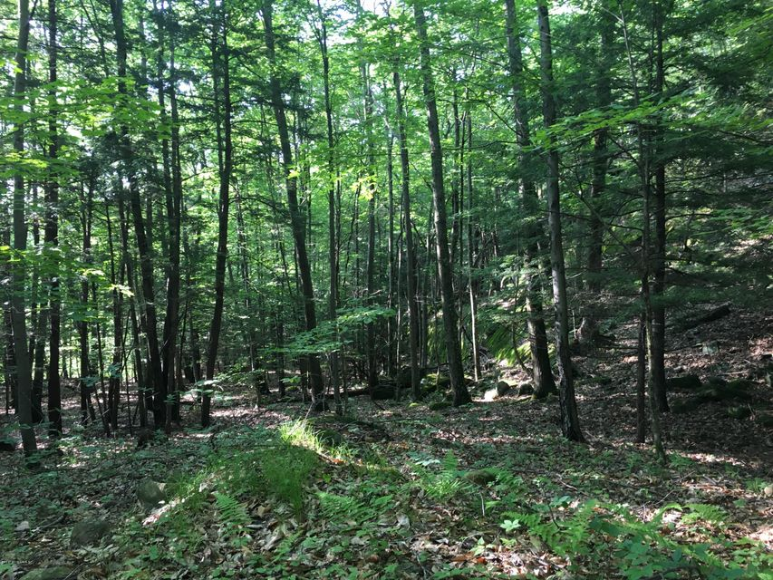 Lot 3 State Route 9L, Fort Ann, NY 12827