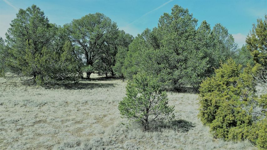 43 state route 603, Pie Town, NM 87827