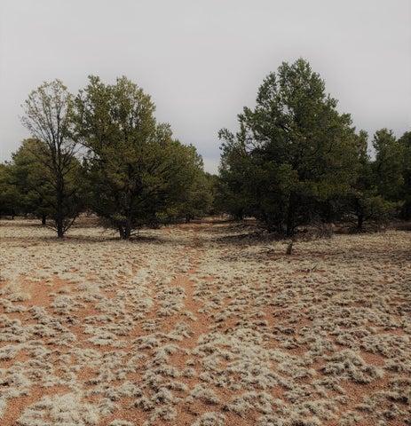 Homestead Trail, Datil, NM 87821