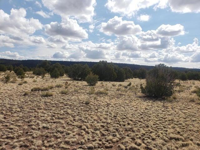 Coyote Drive, Quemado, NM 87829
