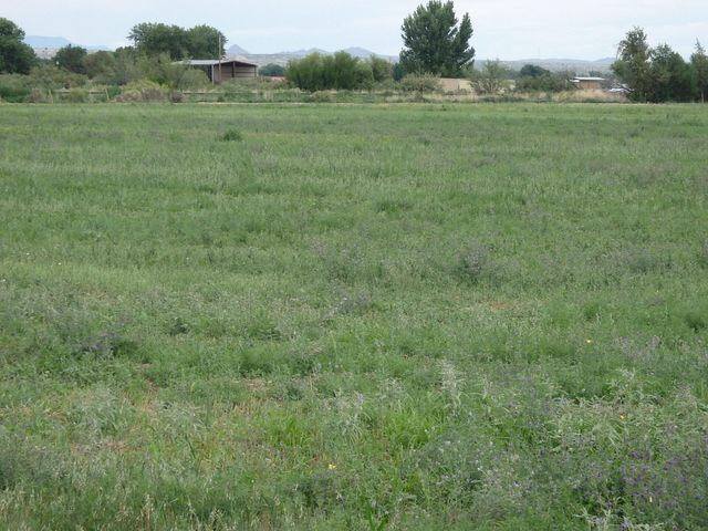 Luis Lopez Farm, Socorro, NM 87801