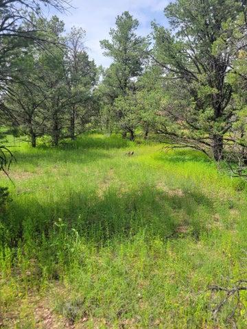 114 Homestead Trail, Datil, NM 87821