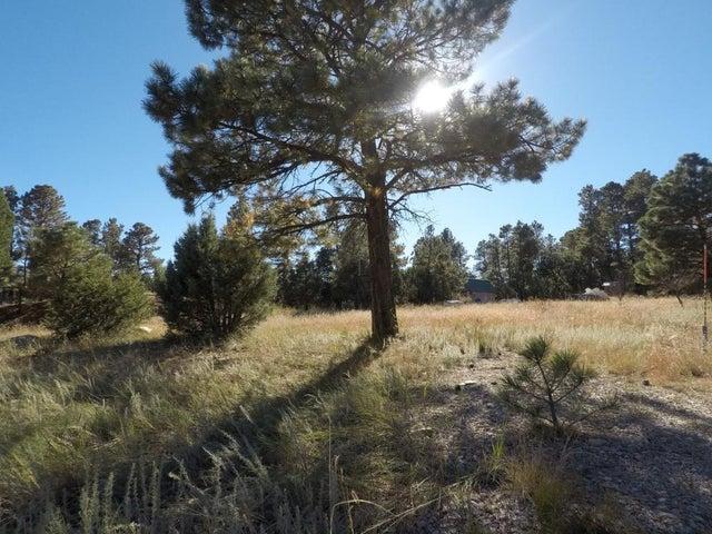 Forest service road 253, Manzano, NM 87016