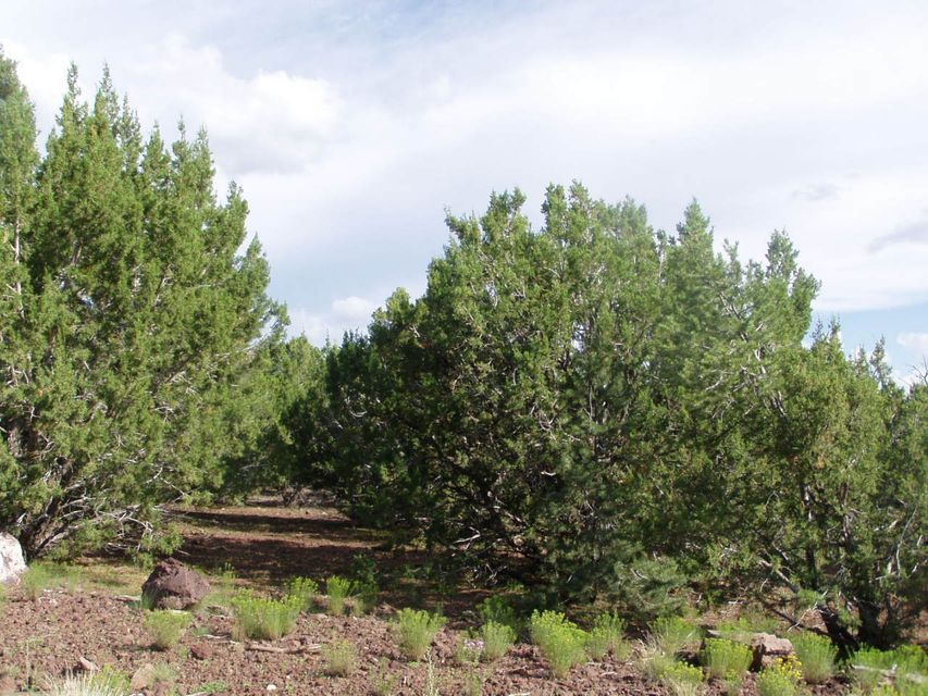 LOT 8 UPHILL Trail Lot 8, Vernon, AZ 85940