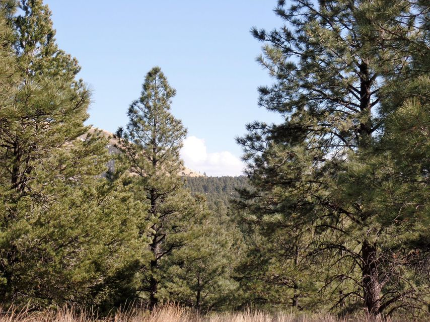 Lot 16 Red Cabin Ranch Estates Lot 16, Vernon, AZ 85940