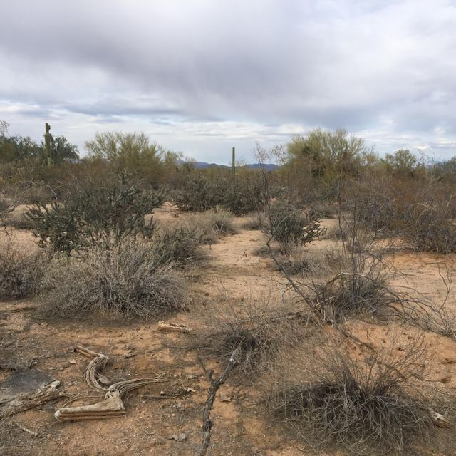 Cavedale Drive, Scottsdale, AZ 85262