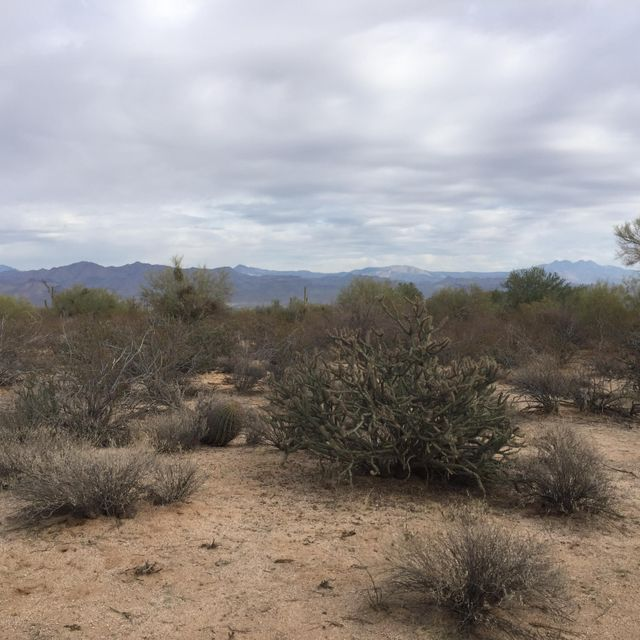 Mark Lane, Scottsdale, AZ 85262