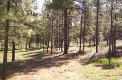 18005 S DIXIE Lane Munds Park, AZ 86017 - MLS #: 5572248