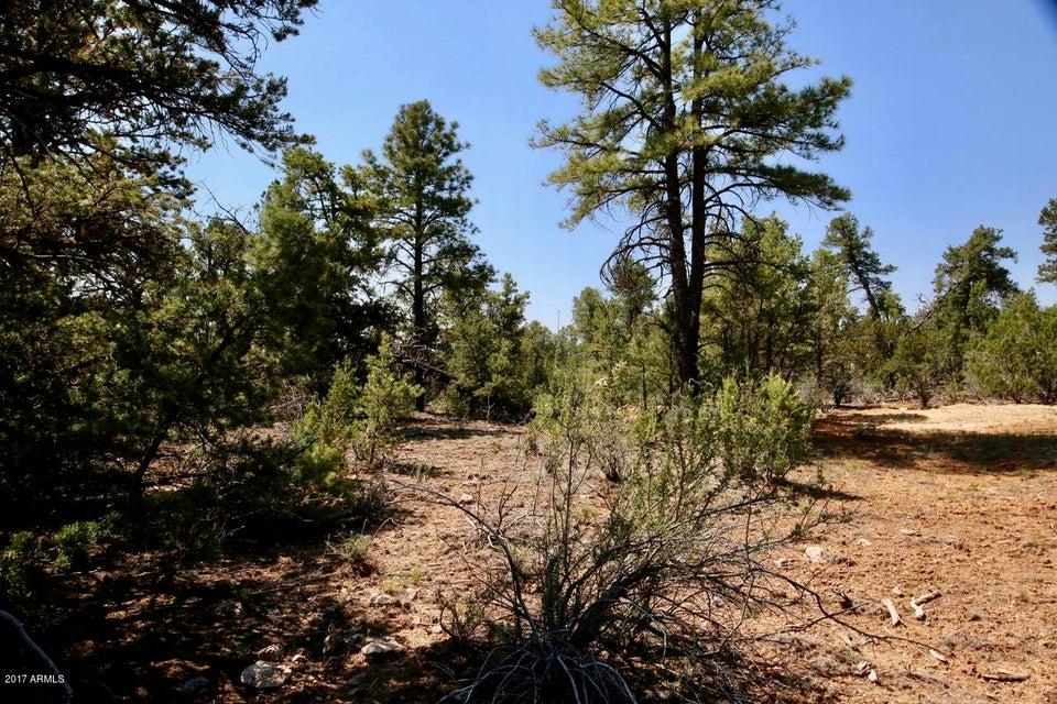 3316 Bear Heights --, Heber, AZ 85928