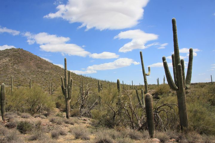 0 N 72 Street, 0, Cave Creek, AZ 85331
