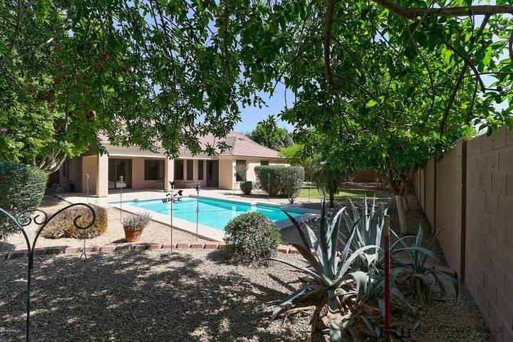 Large backyard with pool, fruit trees and lots of grass and huge covered patio