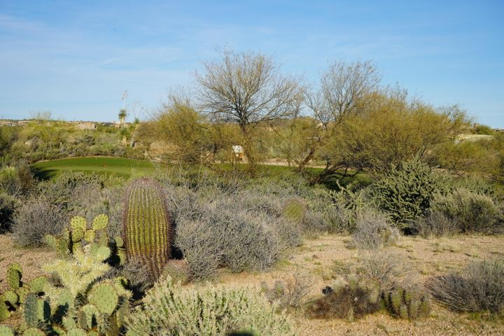 37357 N 104TH Place, Scottsdale, AZ 85262