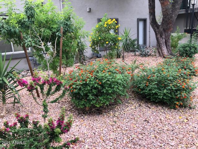 4114 E CALLE REDONDA Road, 52, Phoenix, AZ 85018