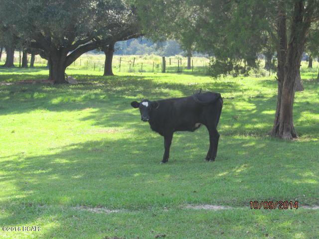 Photo of 4564 SMOKEY Road Graceville FL 32440