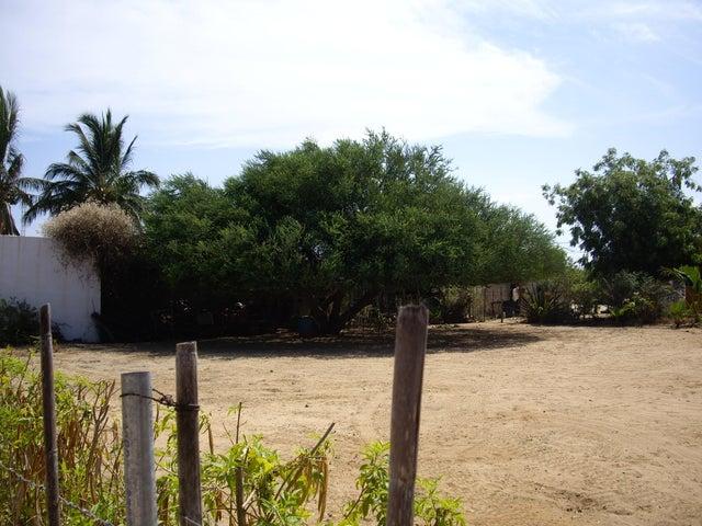 Large & mature Palo Verde tree
