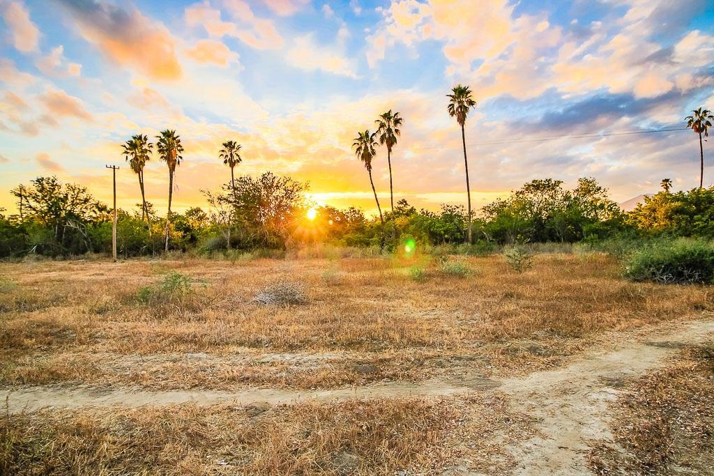 Las Animas, La Mision Farm, San Jose del Cabo,