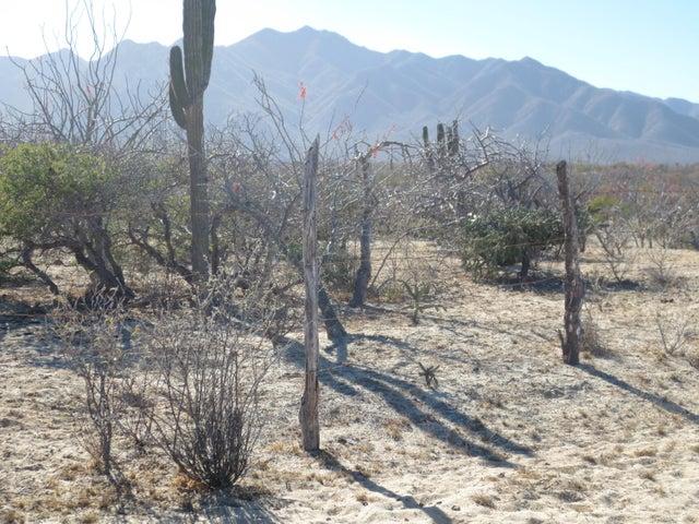 Beautiful cactus on fenced lot