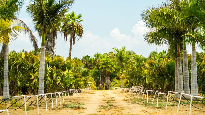 NA, Palm Grove - Palmar