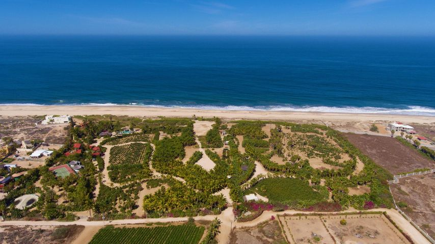 Fly over of the 20 acre Palm Orchard Estates, a Baja Oasis.