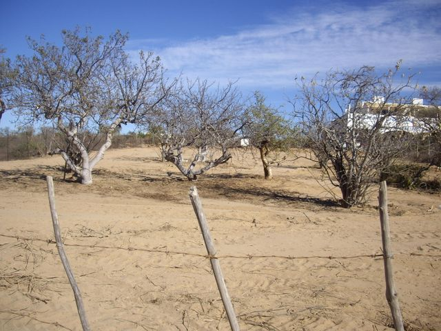 Sin Nombre, Lote Oak #1, East Cape,