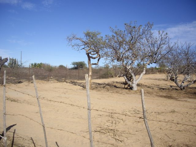 Sin Nombre, Oak Lot #2, East Cape,
