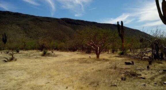 MAZQUITITO, LAND FOR SALE, EL MEZQUITITO, La Paz,