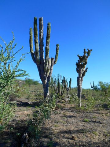 Gorgeous 195 ha (481 acres) of original Baja terrain with  over 500 meters of frontage on the main highway.   Commercial, ranching, hunting, or just a get-away,  the lush desert vegetation, fertile soil and rolling hills have great potential.