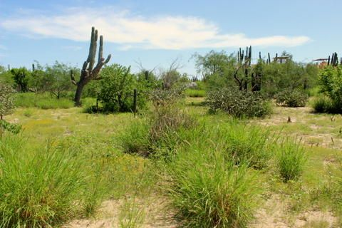 Nice level lot in the beachside community of El Comitan, just 5 minutes walk from the Bay of La Paz. Electricity, water, phone and high speed internet are at the road. Lot is .4 of an acre
