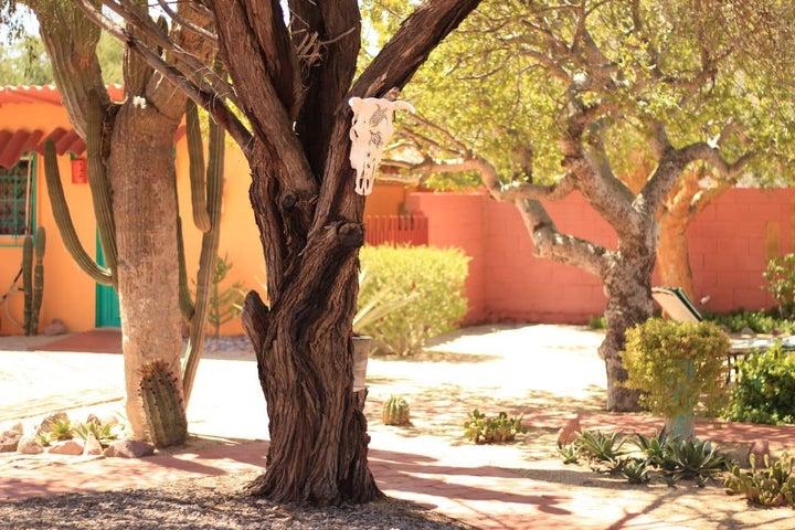 Baja garden