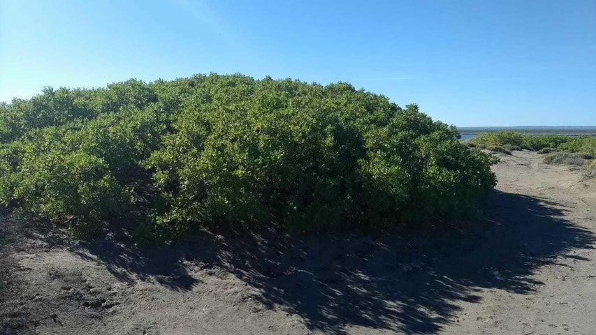 Vegetacion del Mogote
