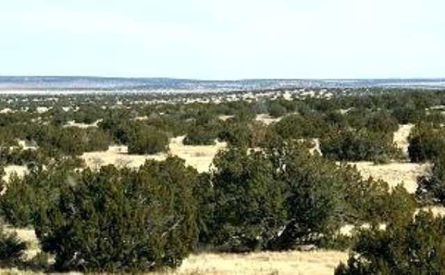 Lot 487 Chevelon Canyon Ranch, Overgaard, AZ 85933