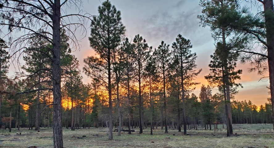--- Forest Rd 122 - Tract 9-A, Happy Jack, AZ 86024