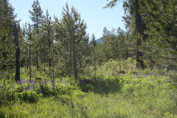 13.8 ac E SON SHINE WAY, Athol, ID 83801