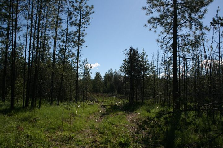 16.3 ac E SON SHINE WAY, Athol, ID 83801