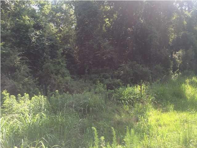 Highway 61 Ridgeville, SC 29483