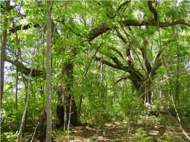 Bell Oak Lane Wadmalaw Island, SC 29487