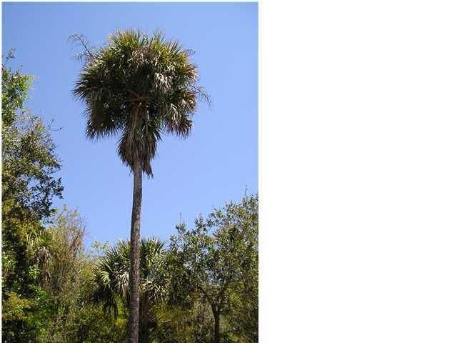 22  42ND Avenue Isle Of Palms, SC 29451