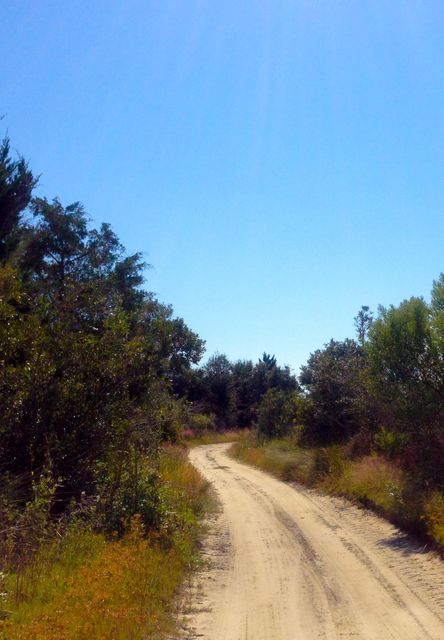 Dewees Island Lots For Sale - 350 Old House, Dewees Island, SC - 9