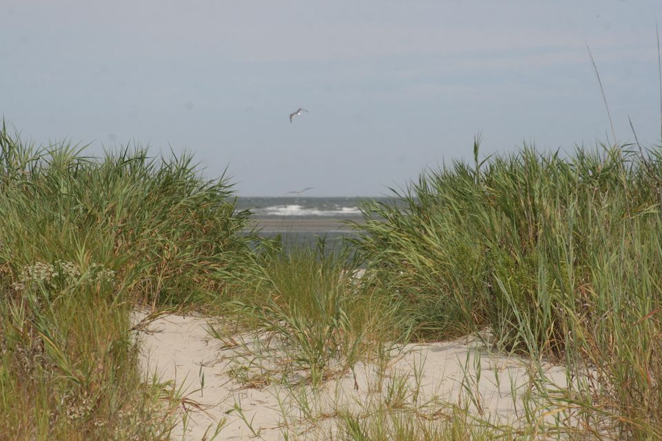 Dewees Island Lots For Sale - 350 Old House, Dewees Island, SC - 6