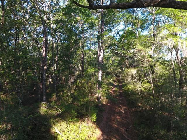 None Lots For Sale - 2952 Bohicket, Johns Island, SC - 26