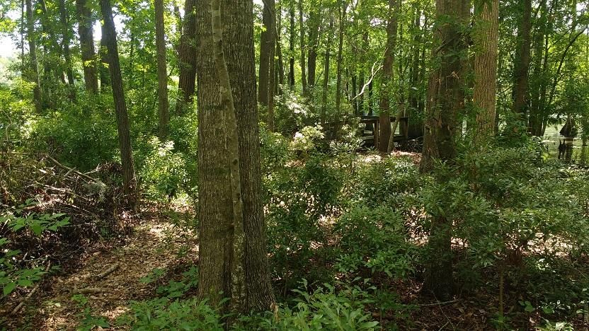 Lot 20 Hickory Landing Court Elloree, SC 29047