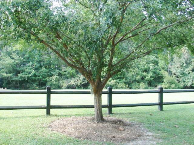 108  Orchard Park Drive Summerville, SC 29485