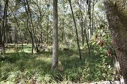 1417  Ravens Bluff Road Wadmalaw Island, SC 29487