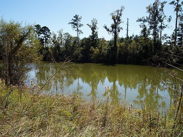 8982  Cat Tail Pond Road Summerville, SC 29485