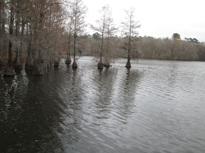 Lot #6  Red Cypress Landing Road Elloree, SC 29047