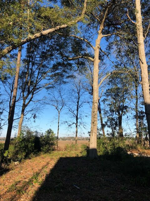 3148  Riverine View Charleston, SC 29414