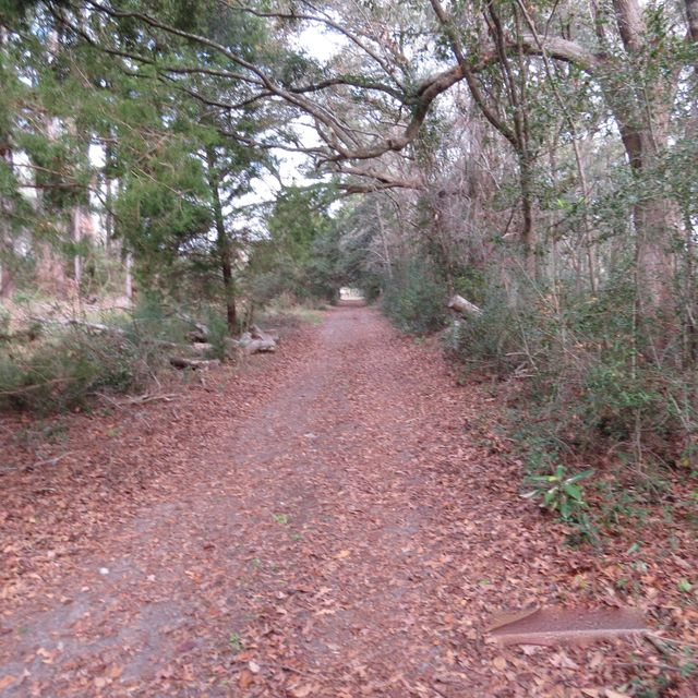 Willa Dick Avenue Johns Island, SC 29455