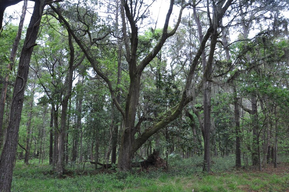 4150  Gnarled Oaks Lane Johns Island, SC 29455